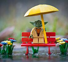 Wet, Yoda Is. by Kristy Beck