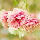 Cherry Blossom Frills by Marilyn Cornwell