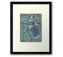 Shiny Beetle Framed Print