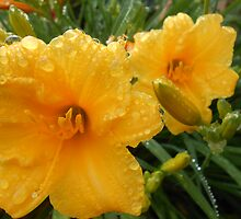 Day lily 3 by BIXLER