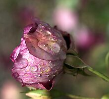 The Beauty Of Rain Drops by Joy Watson