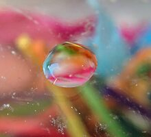 Water drop on glass by © Karin  Taylor