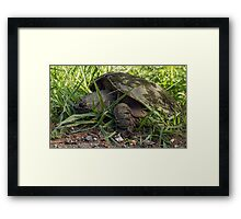 Egg Laying Time Framed Print