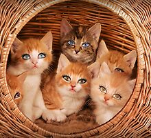 Sweet Kittens by Kitty Bitty