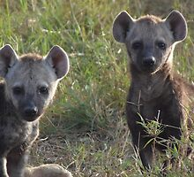 Hyena Cubs Playing at Dawn by KACPhotos