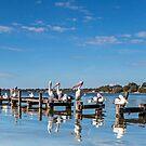 Pelicans on the Pier - Toukley NSW Australia by Beth  Wode