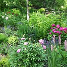 The June Garden by kkmarais