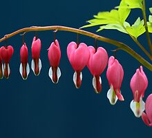 For Your Love - Bleeding Hearts by Debbie Oppermann