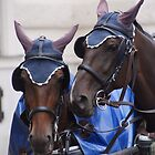 Harness horse pair Bay by Jaycee2009