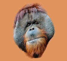 Orang face by Dave  Knowles