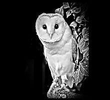 Barn Owl in B&W by Dave  Knowles