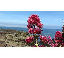 >Flower Title< Photographic Print