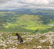 The Fell Terrier by VoluntaryRanger