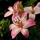 Carla's Lily's  by KSKphotography