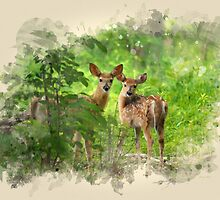 Two Deer Fawns Watercolor Art by Christina Rollo