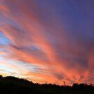 Fanned Sunset by Jenelle  Irvine