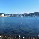 Wellington panorama by PhotosByG