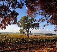 Barossa Autumn Landscape Australia by jwwallace