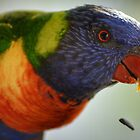 South Coast Lorikeet   by candysfamily