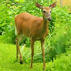 The Perfect Pose ~ White-tailed Deer by artwhiz47