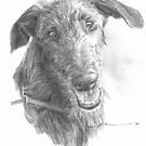 Bristly-haired dog drawing by Mike Theuer