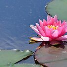 Pink Lily by relayer51