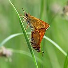 Skippers by Russell Couch