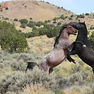 Mustang Waltz by Gene Praag