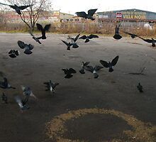 Pigeons Flight in Montreal Suburb. by michel bazinet