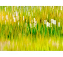 Daisy grass Photographic Print