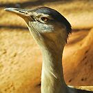 The Aussie Bustard by Penny Smith