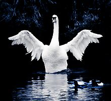 Swan Dance by DanButlerPhoto