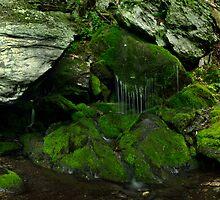 Moss Fall by jswolfphoto