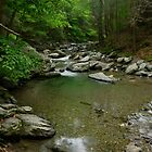 Stream by jswolfphoto