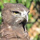 African Crowned Eagle by Lee Jones