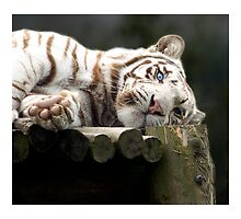 Eye of the tiger by mohik4n22