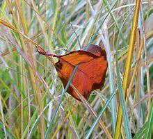 One Leaf Suspended by WildestArt