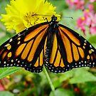 621 monarch by pcfyi