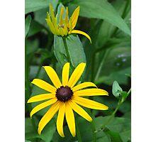 Yellow, Bold, & Beautiful Photographic Print