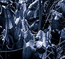 Pitcher Plants in Black and White by Nazareth