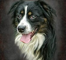 Border Collie by Jacqueline Wilson