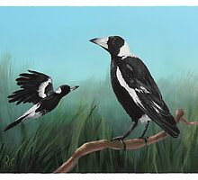 Australian Magpies by Robert  Corcoran