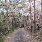 Easy walking track to Sugarloaf Point & Lighthouse. N.S.W. Nth. Coast. by Rita Blom