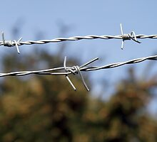 Barbed wire and Nature by brijo