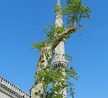 Istanbul - The Minaret and Tree by hans p olsen