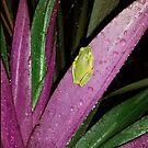 tiny frog by Elisabeth Dubois