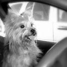 I'll Drive.... by Grinch/R. Pross