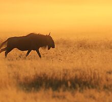 Blue Wildebeest - African Wildlife - Nature's Faded Gold by LivingWild
