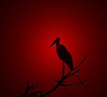 Marabou Stork - Sunset Red - African Wild Birds by LivingWild