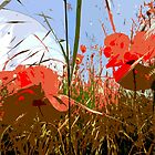 Poppy fields by Emma Bennett